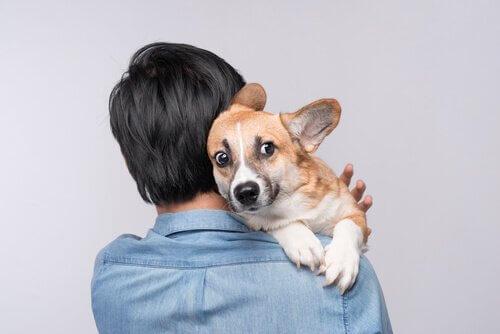 Cachorro com medo no colo do dono