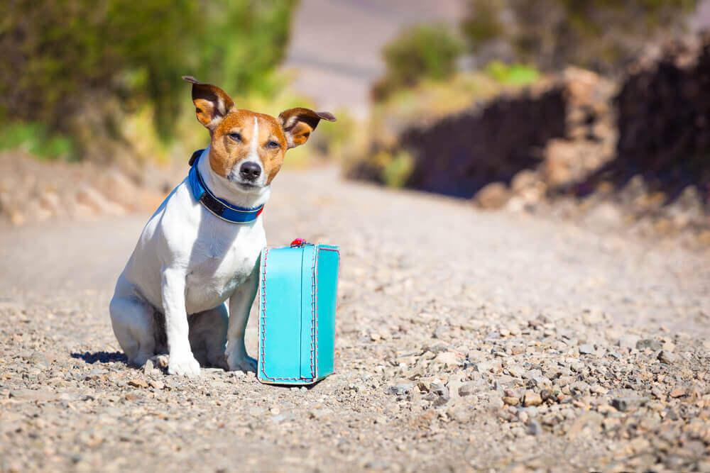 Cachorrinho em busca de um lar