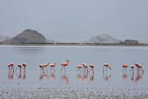 O segredo por trás da cor dos flamingos