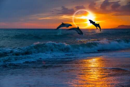 Golfinhos durante um eclipse