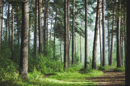 A reserva criada pelo homem que plantou uma floresta