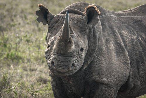 5 espécies à beira da extinção