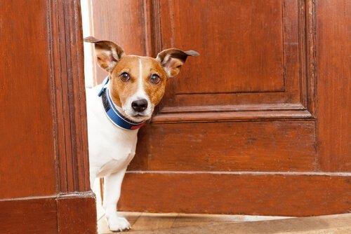 Cão de apartamento