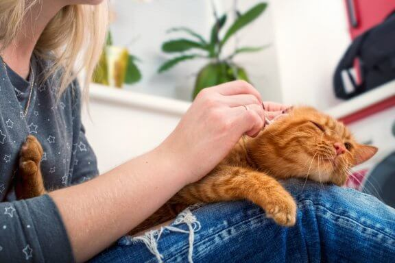Como fazer com que seu gato seja carinhoso