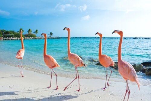 Onde os flamingos vivem