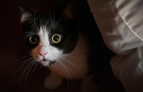 Tratamento da ansiedade em gatos