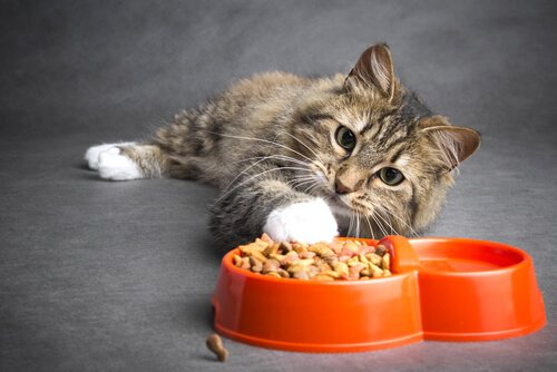 Sintomas para detectar a constipação em gatos
