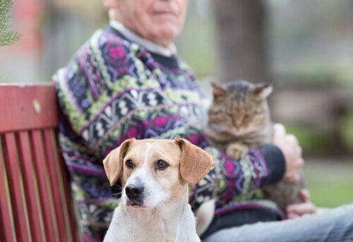 Senhor idoso com cão e gato