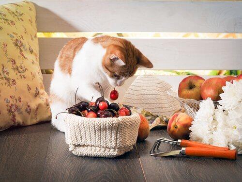 Frutas e vegetais proibidos para gatos