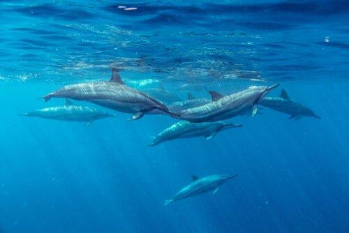 Mare Nostrum: por que cuidar dos oceanos é mais importante do que nunca