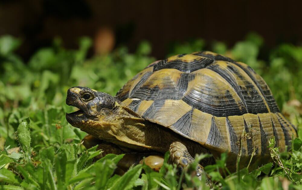 Diferenças entre as tartarugas