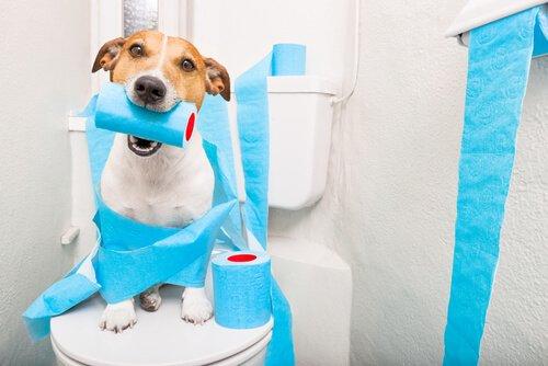 Cachorro brincando com papel higiênico