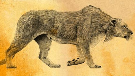 Fauna extinta: o leão-das-cavernas