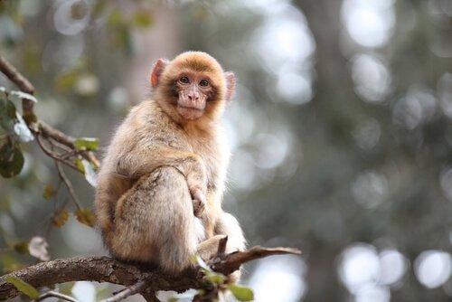 Macaco em galho de árvore