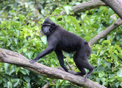 Primatas da china