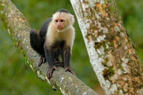 Macaco pequeno em árvore