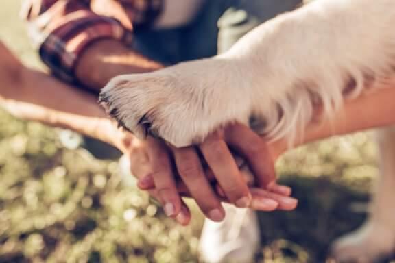 Qual foi o primeiro cão doméstico?