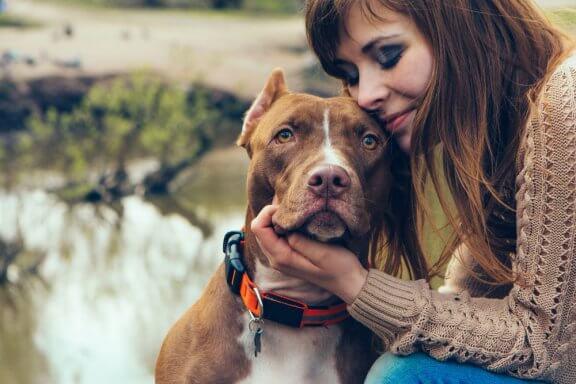 Adotar cães adultos: vantagens e desvantagens