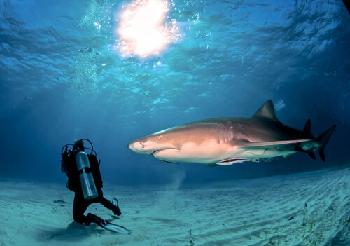 Mergulhador com tubarão