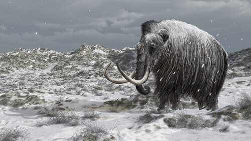 A história dos últimos mamutes