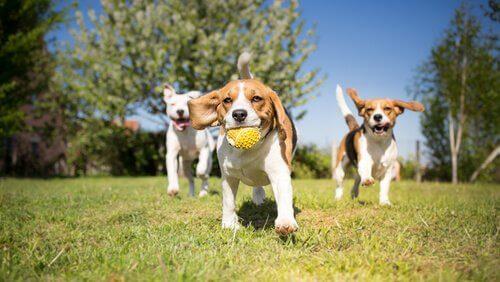 Quais são as características de um bom parque para cachorros?