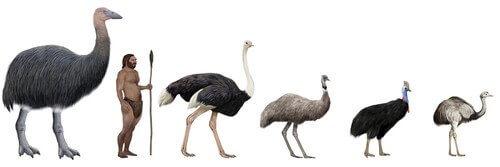 Conheça a maior ave do mundo