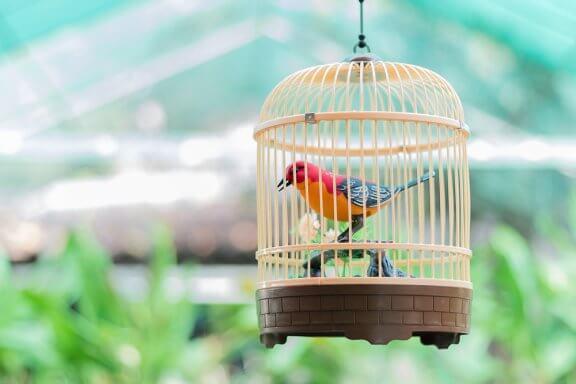 5 passos para limpar a gaiola dos pássaros