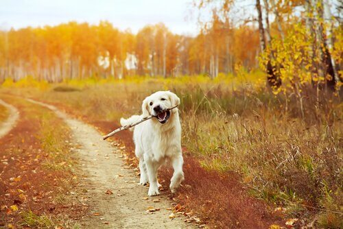 Passear com o cachorro na natureza