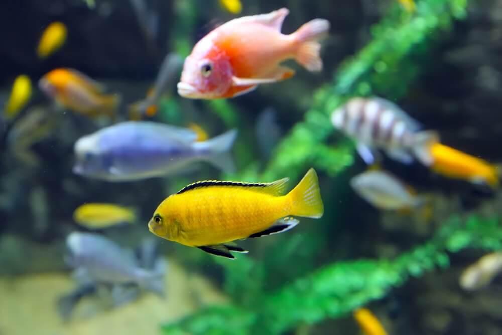 As doenças mais comuns nos peixes e seus sintomas