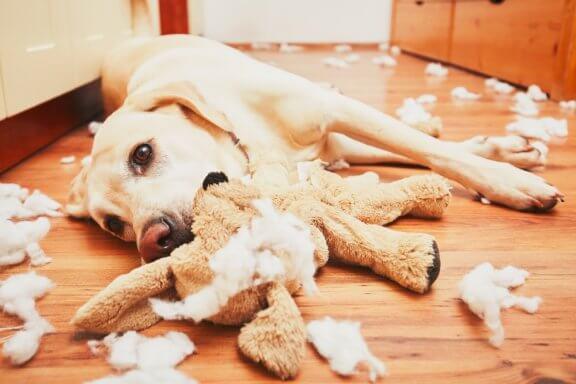 6 problemas comportamentais comuns dos cães