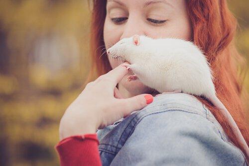 Decida o que você quer ensinar para o seu rato de estimação