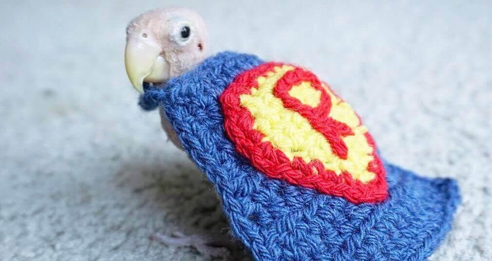 Rhea, um pássaro sem penas