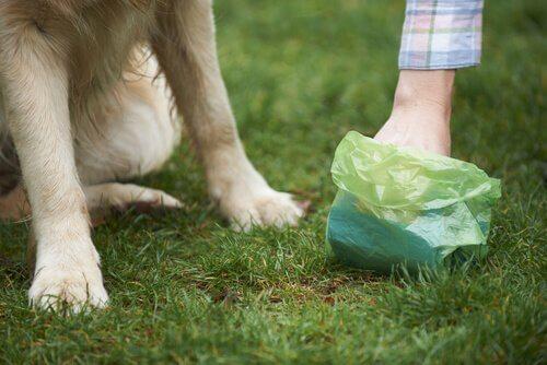 Salmonella em cães: o que você deve saber