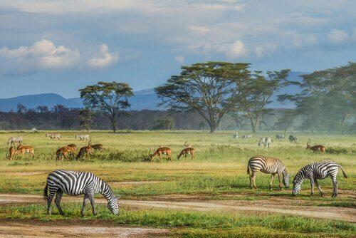 6 curiosidades sobre a savana africana