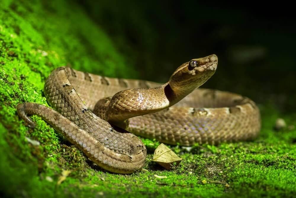 Diferenças entre cobra, serpente e víbora