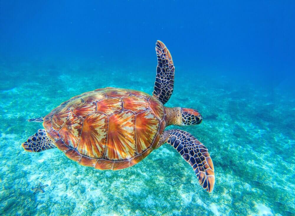 Quais são os efeitos das mudanças climáticas sobre as tartarugas?