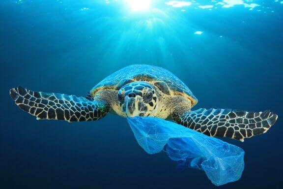O curioso e perigoso efeito das mudanças climáticas sobre as tartarugas