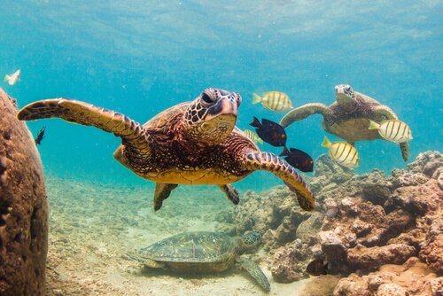 Um mundo sem tartarugas: você sabe o que aconteceria?
