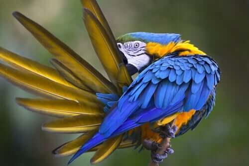 A coceira nos pássaros