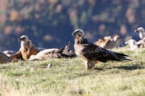 Aves em seu habitat natural