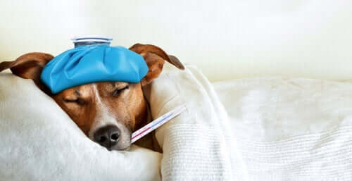 Cachorro doente na cama