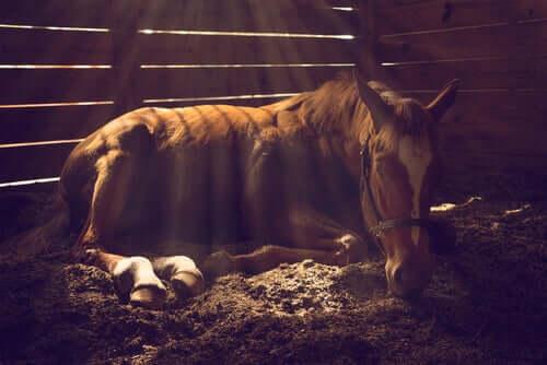 Os problemas de pele mais comuns em cavalos