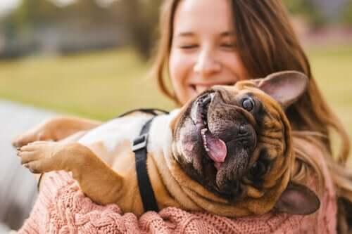 Prevenção contra as doenças comuns em cachorros