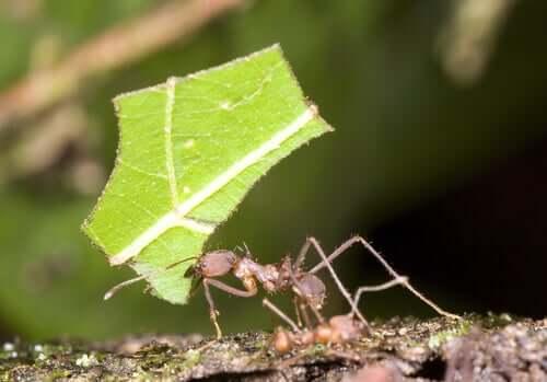 Informações gerais sobre as formigas