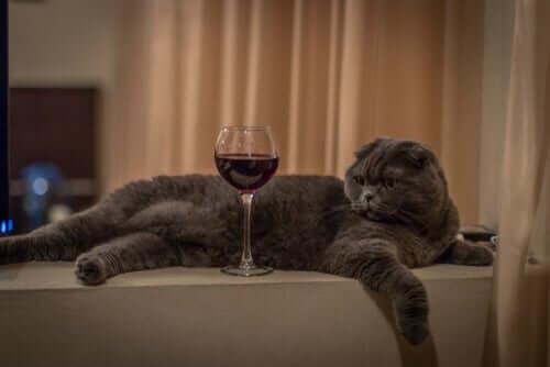 Danos e consequências de dar álcool ao seu gato