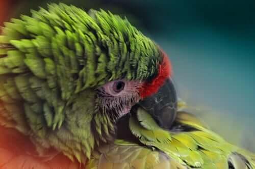 As penas podem indicar doenças nas aves