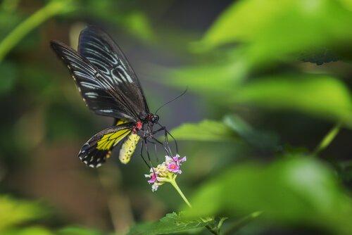 As 5 maiores borboletas do mundo