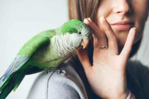 Doenças que causam alterações nas penas das aves