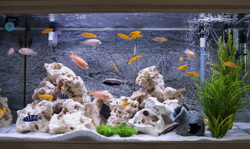 Aquário cheio de peixes