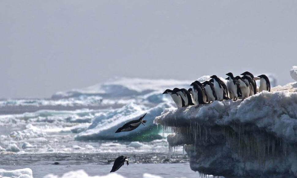 Pinguins mergulhando em águas congeladas